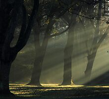 Morning Rays by Wynston Cooper ARPS