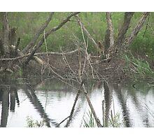 Reflecting Stumps Photographic Print