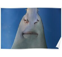 Hotlips; The Smile of a Sawfish. Poster