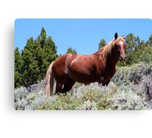 Majestic Stallion,Virginia City Highlands,Virginia City Nevada USA Canvas Print