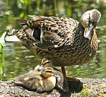 I told you we would go swimming later by Heather King