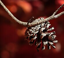 PINECOMB by vincentphoto