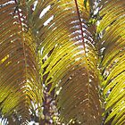 Fern: Hawai'i Volcanoes National Park by Sally Kate Yeoman