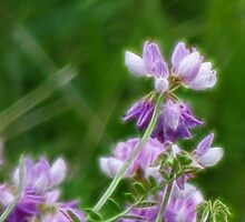 Crown Vetch in Fractalius by vigor