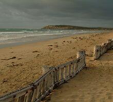 Joe Mortelliti Gallery - Early morning, RAAFS beach, Bellarine Peninsula, Victoria, Australia.  by thisisaustralia