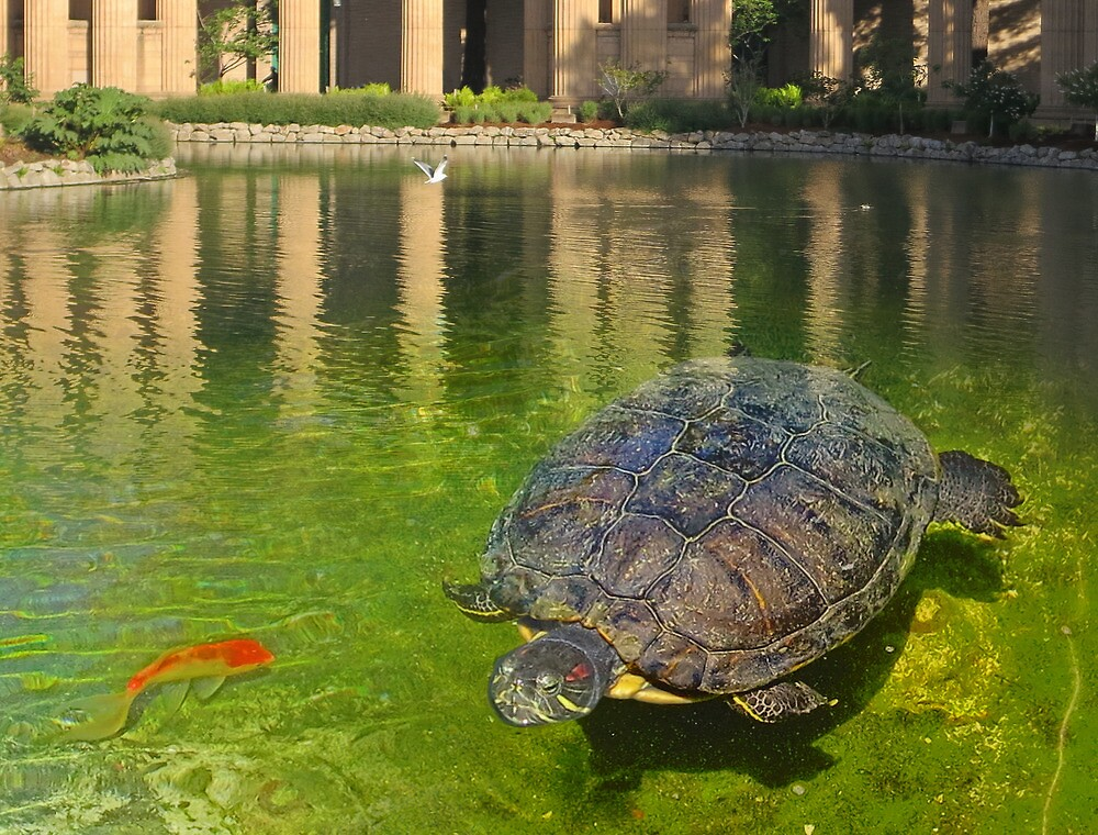 Turtle and the Koi by David Denny