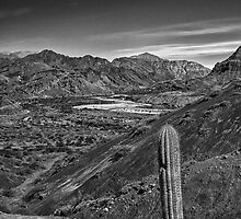 The Lonely Cactus - in monochrome by photograham