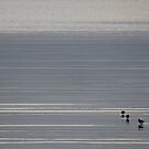 Bruny Island birds by gaylene