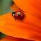Bicolor Bugs