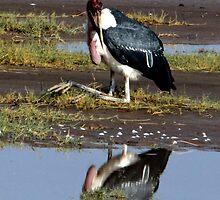 Mirror Mirror  -  Marabou Stork (Leptoptilos crumeniferus  ) Lake Nadutu Southern Serengeti  Tanzania by john  Lenagan