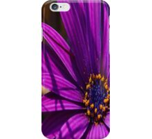 Purple African Daisy Close Up iPhone Case/Skin