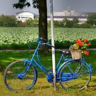 Blue Bicycle, Meerbusch, NRW, Germany by David A. L. Davies