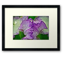 Another Iris Framed Print