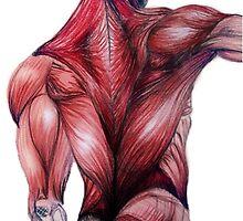 Muscle Study by Elizabeth Aubuchon