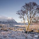Glen Coe Tree by Brian Kerr
