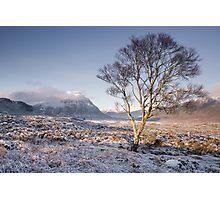Glen Coe Tree Photographic Print