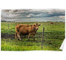 Alberta Beef Poster