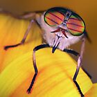 Cool shades by jimmy hoffman