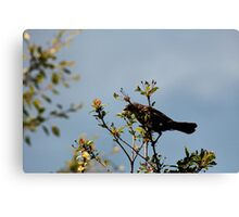 Funny Speckled  Bird Canvas Print