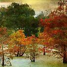 Cypress by Ginger  Barritt