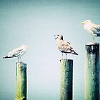 Seagulls on a pier by woodnimages