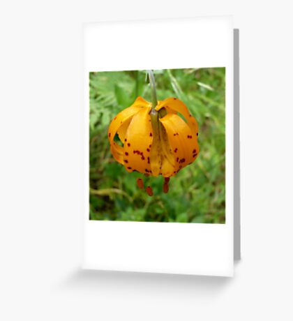 Wild Tiger Lily 2 Greeting Card