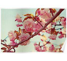 lovely spring Poster
