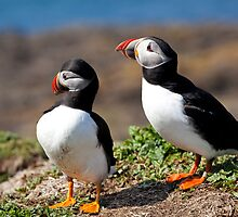 Two Puffins in Scotland's Hebridean Islands by Christy Woodrow
