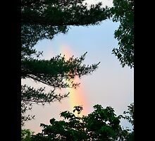 Forest Rainbow - Middle Island, New York  by © Sophie W. Smith