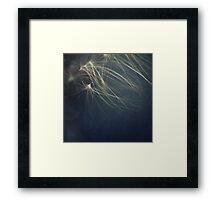 Fireweed Seeds Framed Print