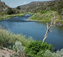 Along the Rio Grande River by Lucinda Walter