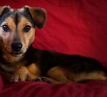 Penny the Model Dog by Julia Haptonstahl