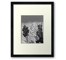 Alpinia purpurata – Red Ginger Flower - Black and White Greyscale Framed Print