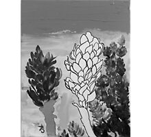 Alpinia purpurata – Red Ginger Flower - Black and White Greyscale Photographic Print