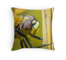 Four-spotted Chaser close-up. Throw Pillow