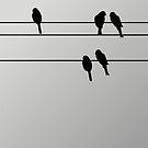 pbbyc - Birds on a Wire by pbbyc
