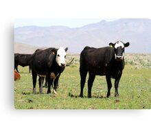 Cows...Reno Nevada USA Canvas Print