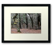 Late Autumn - Hill End Framed Print