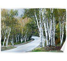 The Shelburne Birches Poster