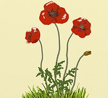 Field Poppy by SophiaDeLuna