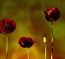 Papaver'... by Valerie Anne Kelly