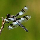 Dragonfly by Arla M. Ruggles