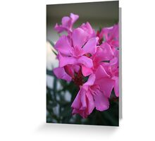 Pink Oleander Bunch Greeting Card