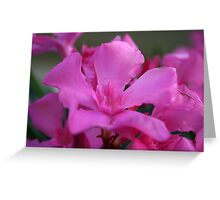 Pink Oleander Flower With Green Leaves in the Background  Greeting Card