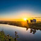 The Cows by THHoang