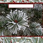 Christmas card with snow on pine by Cheryl Hall