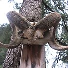 Deer Tree by AnkitaPopli