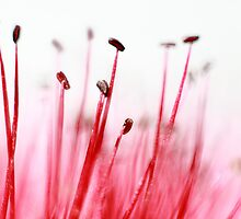 Flower arranging. by Paul Pasco