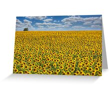 Sunflower Afternoon - Texas Wildflower Images - Happiness Greeting Card