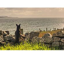 The Scottish Terrier Photographic Print